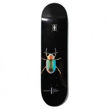 """Beetles Pacheco 8.125"""""""