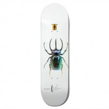 Beetles Bannerot 8.5""