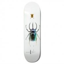 "Beetles Bannerot 8.5"""
